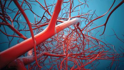 veins-and-arteries