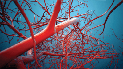 veins-and-arteries