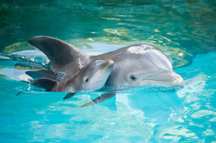 Pesticide Ingredients Found in Dolphins, Bird and Fish