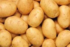 genetically engineered potatoes