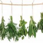 herbs e1478641761528 Holistic Health Online