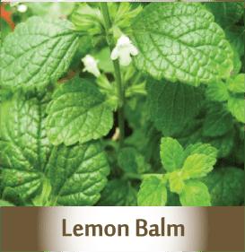lemon-balm.png