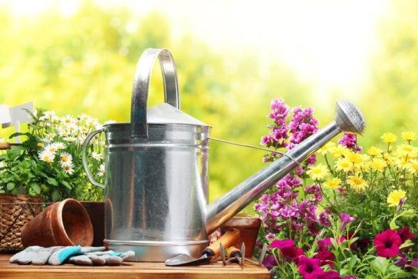 Prepping: Garden on a budget