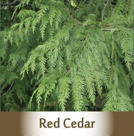 red-cedar.png