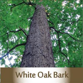 white-oak-bark2