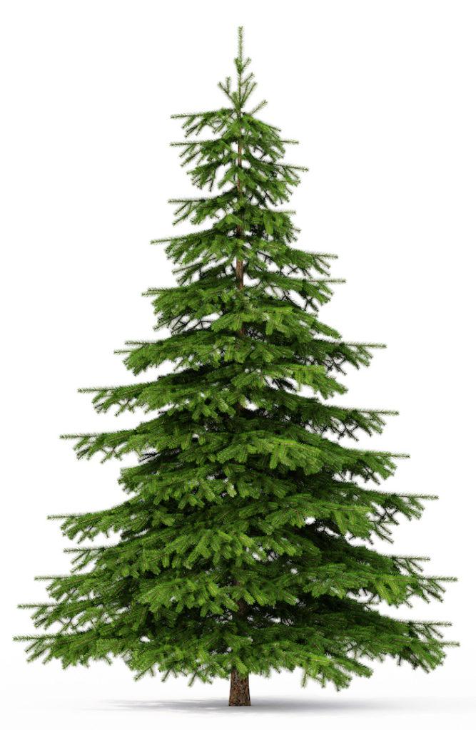 christmas tree Does your christmas tree need to be organic too?