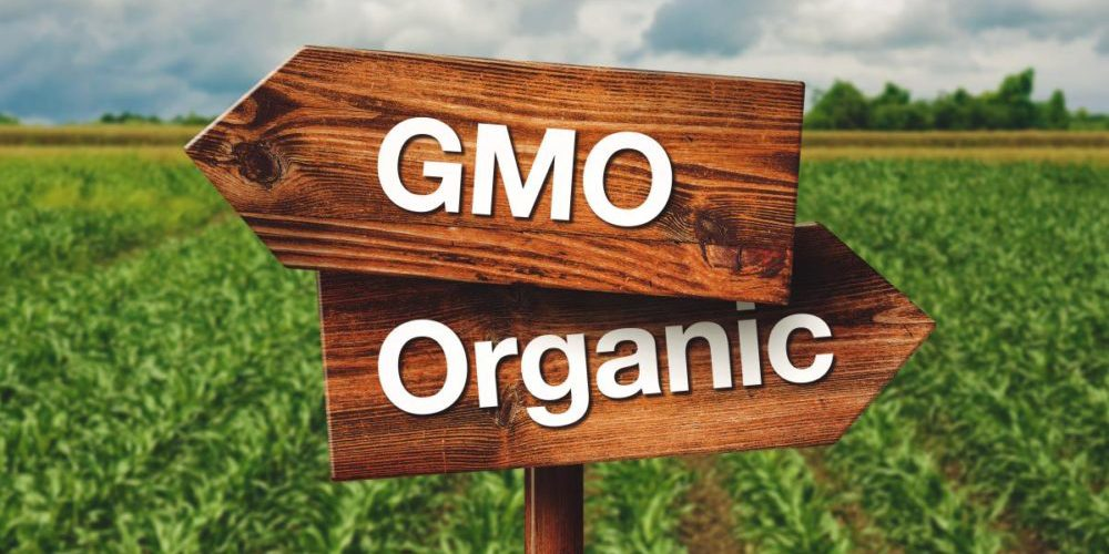 Indian state will pay farmers to go 100 percent organic and GMO-free