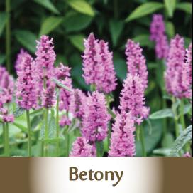 Betony Botanicals