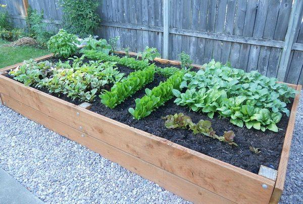 Organic pest control for gardens (natural options)