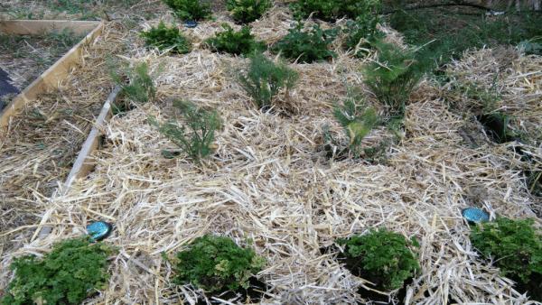 fourPucks plotcorners 2 Orgonite Urban Garden Set