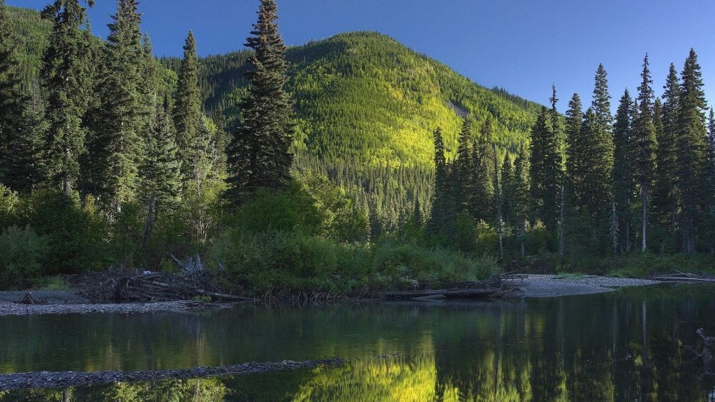 stream through mountain forest in canada wallpaper If you care about the environment, you must oppose Big Pharma