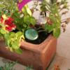puck n flowerpot 720p Orgonite Community Garden Set