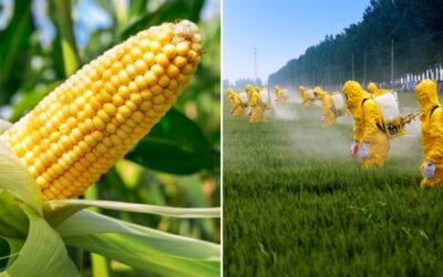 Mexico bans GMO corn and Glyphosate (Roundup weed killer)
