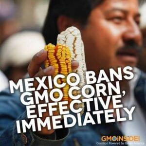 mexico bans GMO corn and glyphosate Roundup