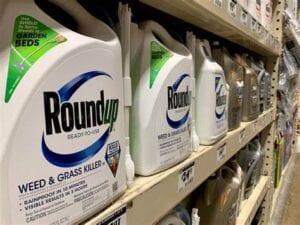 roundup glyphosate Mexico bans GMO corn and Glyphosate (Roundup weed killer)