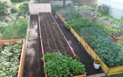 New Illinois Bill would protect the right to garden