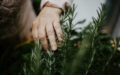 Engage the senses with a sensory garden