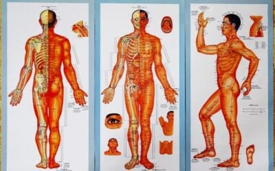 How Qi (chi) energy flows through the 12 meridian points that exist within your body